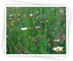 Description: http://women.kapook.com/wp-content/uploads/2009/04/flower-grass.jpg