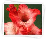 Description: http://women.kapook.com/wp-content/uploads/2009/04/flower-galdiolus.jpg